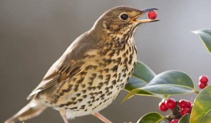 El impacto de las aves en la adaptación de las plantas
